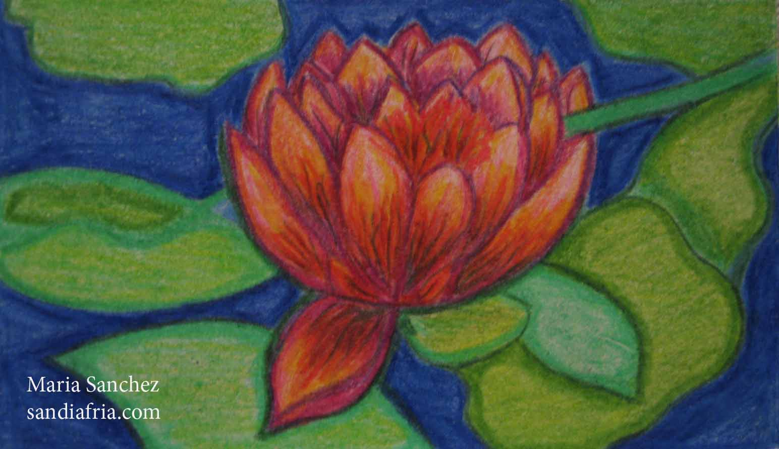 Lotus Colored Pencil Drawing Maria Sanchez
